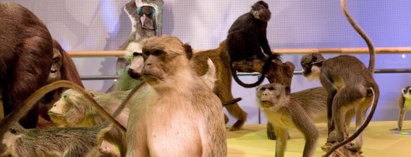 Dolle beestenbende inMuseum Naturalis