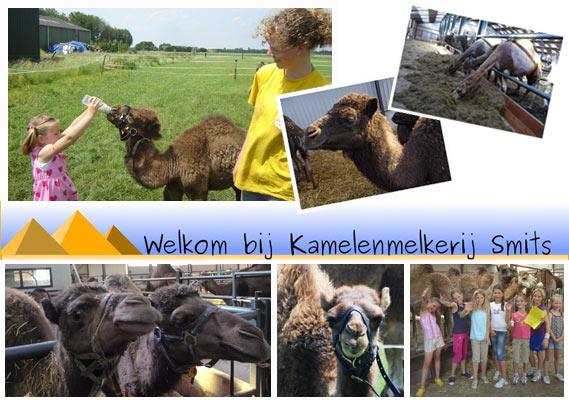 bezoek een kamelenmelkerij