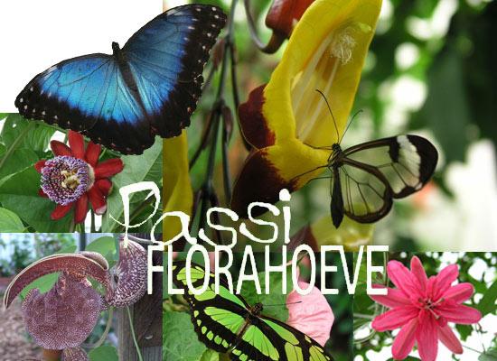 vlindertuin Passiflorahoeve